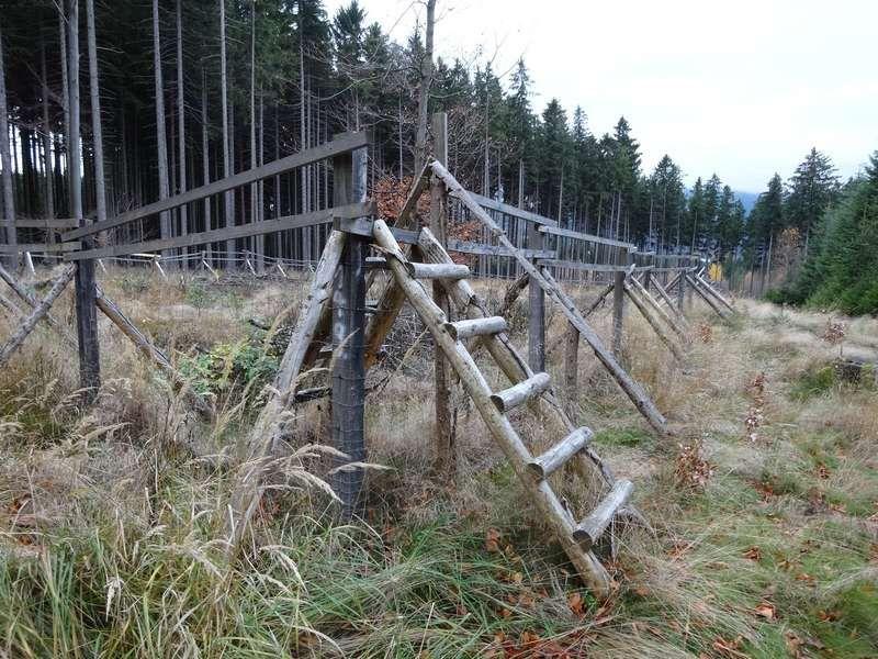 Podpora biodiverzity lesních ekosystémů v Jizerských horách