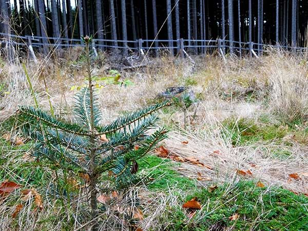 Zvýšení stability lesních porostů na Liberecku v roce 2017