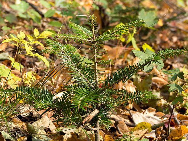 Zvýšení stability lesních porostů na Liberecku v roce 2020