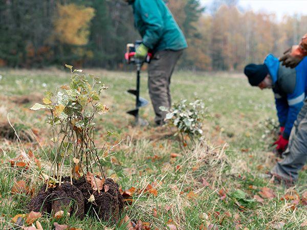 Projekt Zvýšení stability lesních porostů v roce 2020