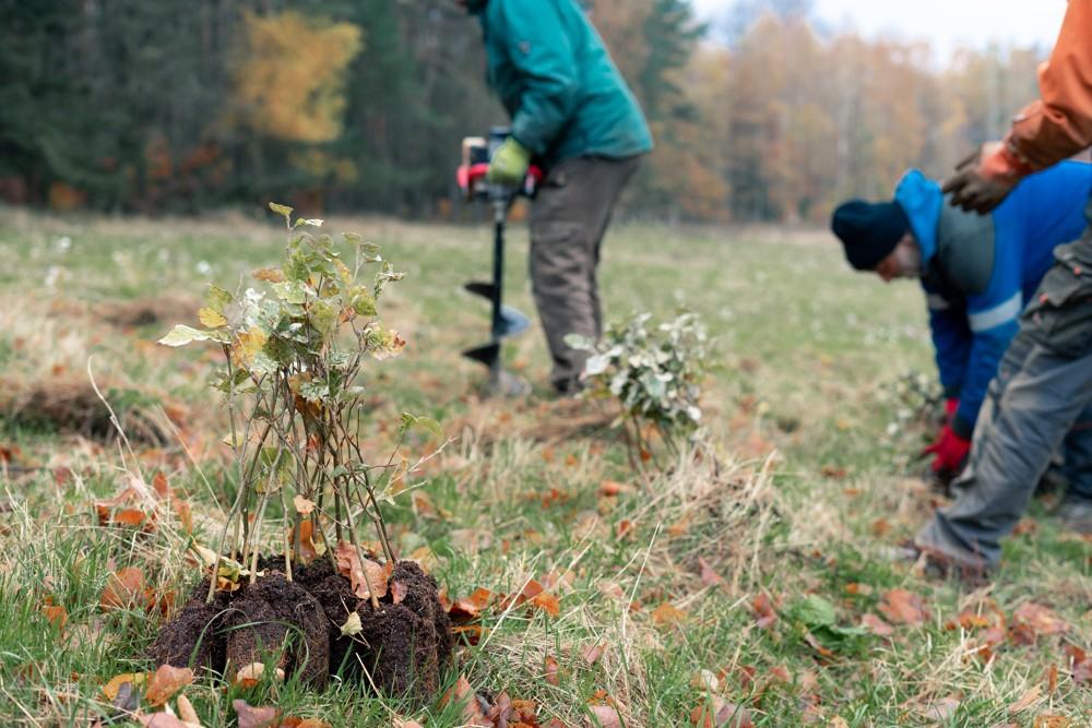 Zvýšení stability lesních porostů na Liberecku v roce 2021